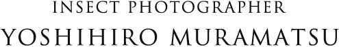 yoshihiro muramatsu